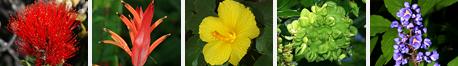 Hawaiian View Plants