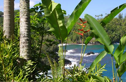 Hawaiian tropical plants and flowers
